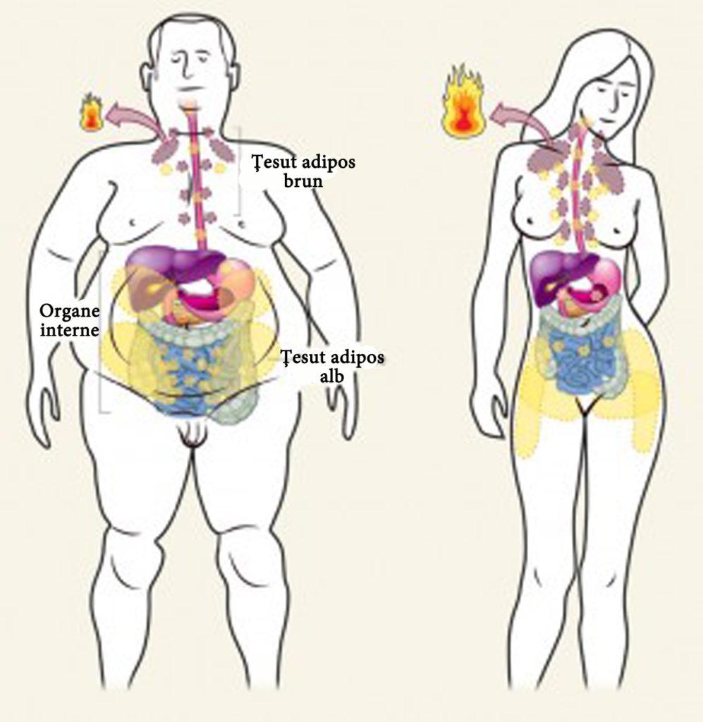 scădere zilnică în greutate